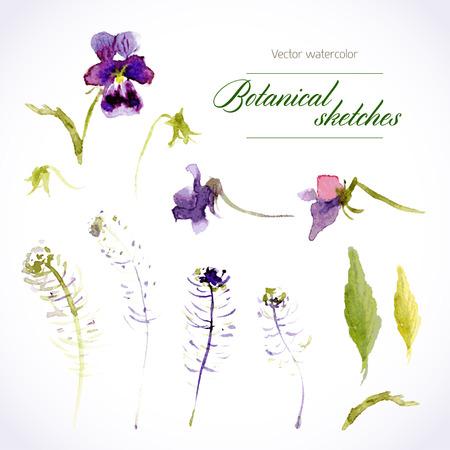 purple flowers: Botanical sketch. Vector set of watercolor pansies