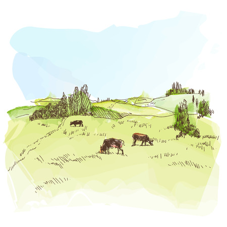 graze: Vector watercolor image of the rural landscape