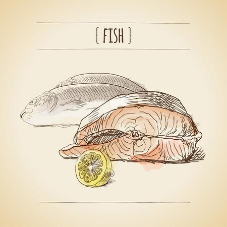 salmon fillet: Vector vintage watercolor sketch. Still life of fish