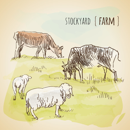 cows grazing: Vector watercolor sketch of grazing cows and sheeps