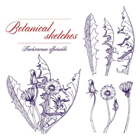 fiori di campo: Vector un bianco e nero abbozzo botanico di fiori di campo Vettoriali