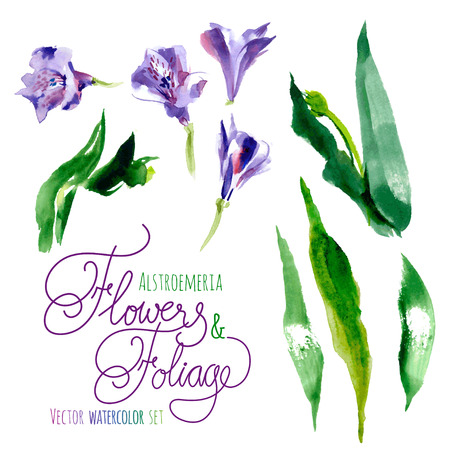 purple flower: Vector set of watercolor flowers and leaves