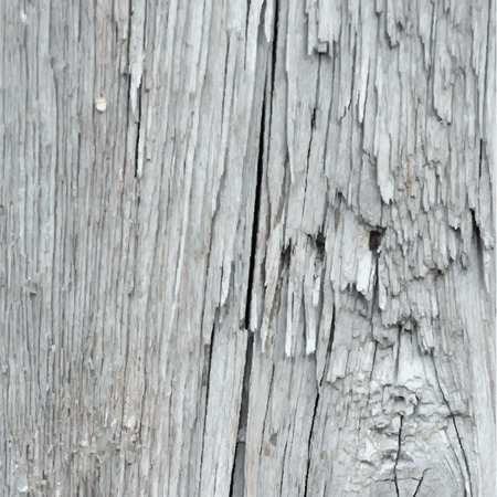 painted wood: Vector wood texture. Old weathered painted wood Illustration