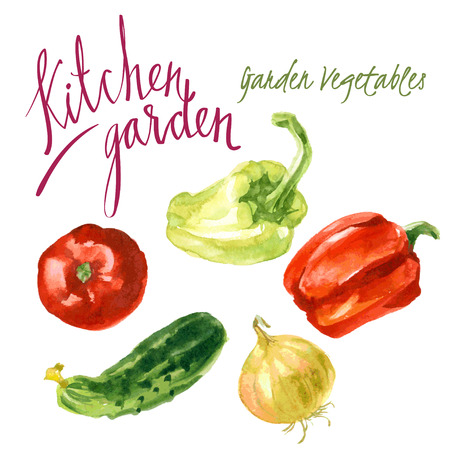 green pepper: set of watercolor sketches. The harvest from the garden