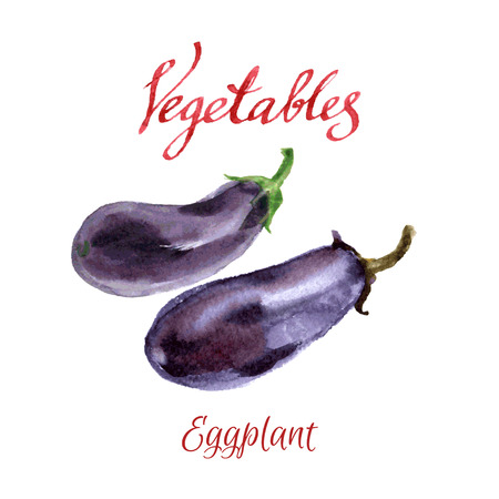 kitchen garden: watercolor sketch. Vegetables from a kitchen garden. Eggplant Illustration