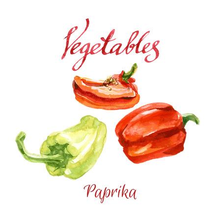pimenton: watercolor Verduras bosquejo de una huerta. Paprika.