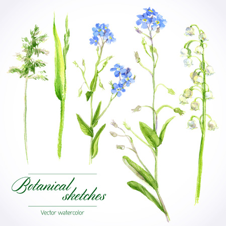 grass: botanical watercolor sketches of wild grasses and flowers Illustration