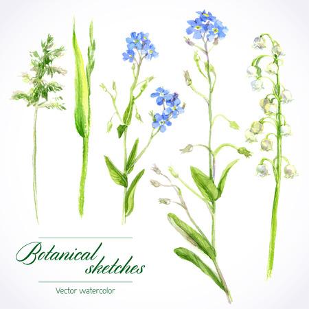 fiori di campo: schizzi ad acquerello botanico di erbe selvatiche e fiori Vettoriali