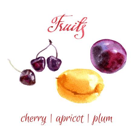 kitchen garden: watercolor sketch. Fruits from a kitchen garden.  Illustration