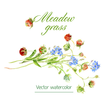 grasses: botanical watercolor sketches of wild grasses and flowers Illustration