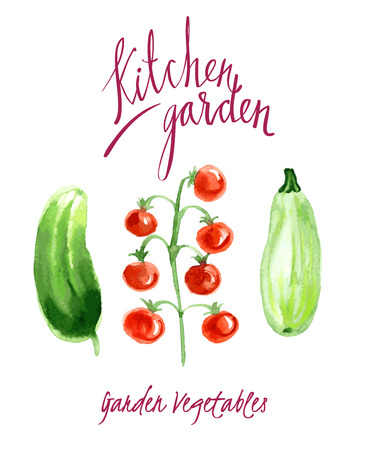 courgette: set of watercolor sketches The harvest from the garden