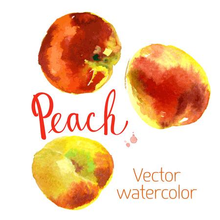 Vector watercolor sketch. Juicy ripe fruit. Ruddy peaches