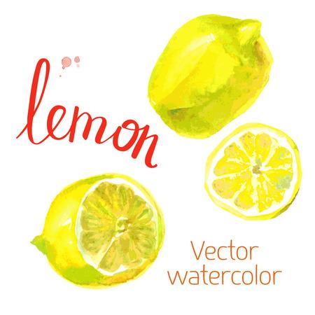 Vector watercolor sketch. Juicy ripe fruit. lemons