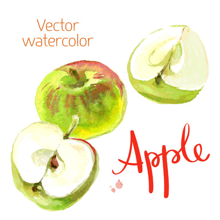 green apples: Vector watercolor sketch. Juicy ripe fruit. Green apples