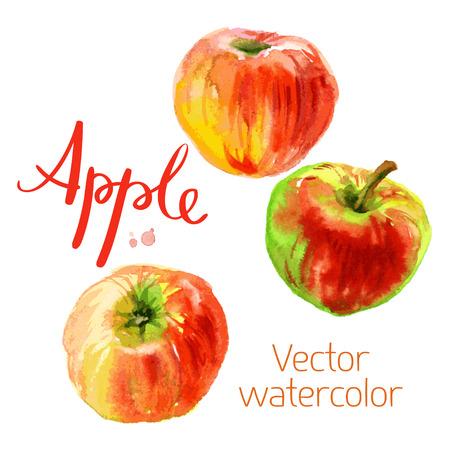 Vector watercolor sketch. Juicy ripe fruit. Red apples Illustration