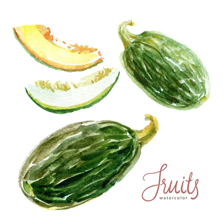Watercolor sketch. Green melon, whole fruit and slices