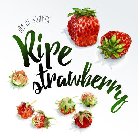 Berries of wild and garden strawberries, painted in watercolor