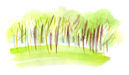 Watercolor illustration of a green spring trees