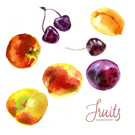 Watercolor sketch. Fruits from a kitchen garden. Apricot, peachs, cherry and plum