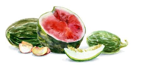 Watercolor food. Fresh fruit still-life. Watermelon, melon, apple