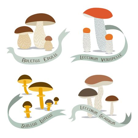 Vector image of edible mushrooms with their names on a white background