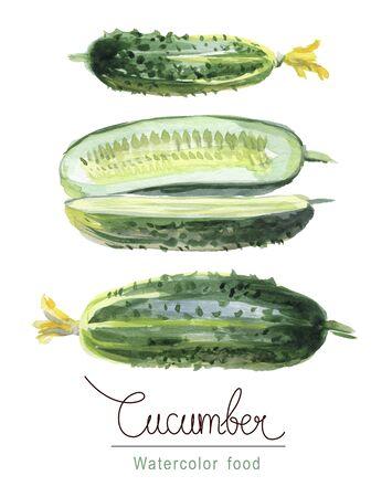 Watercolor botanical sketch. Set of cucumbers with flower buds Reklamní fotografie