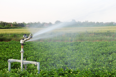 irrigating: Irrigating with the sprinkler in the field