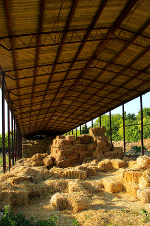 Golden straw piles for animal feed Stock Photo