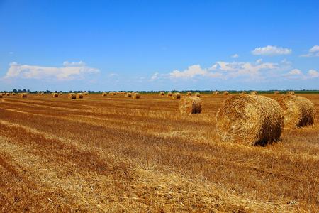 Agrarisch landschap met baal van hooi op het gebied Stockfoto