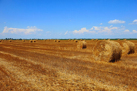 Agricultural landscape with bale of hay in the field Stok Fotoğraf