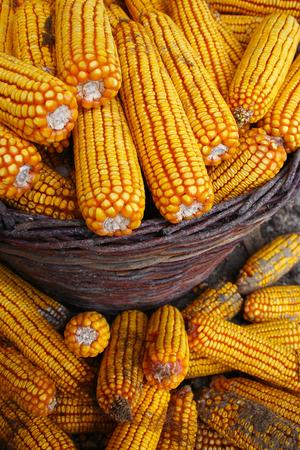 Gele maïs in de mand Stockfoto