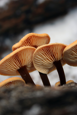 Mushrooms with blurred background