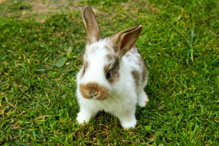 Weinig konijn