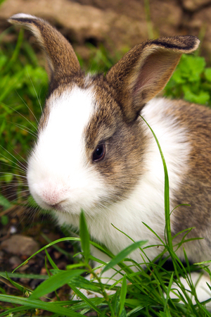 Bruin en wit konijn die zich in het gras