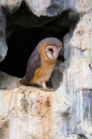 Little cute owl standing in a cave