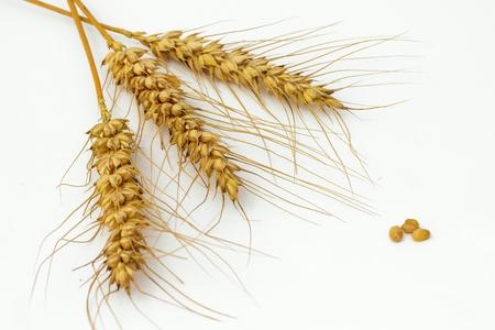 Drie gerst oren geïsoleerd op een witte achtergrond met een paar van tarwe zaden Stockfoto