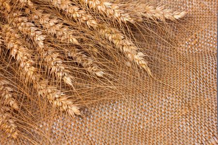 Gouden gerst oren op een zak stof