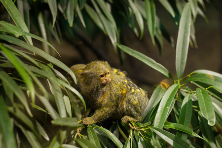 Two little monkeys standing on a green tree in Budapest Tropicarium