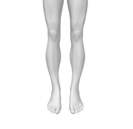 Human 3D Rendering Legs isolated on white