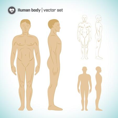 young people group: Illustrazione vettoriale corpo umano, eps10, contenente i lucidi