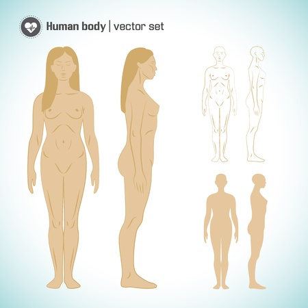 Human  body  Vector Illustration, eps10, contains transparencies  Stock Vector - 19800591