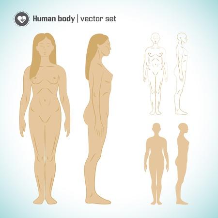 leg muscle: Human Ilustraci�n Vector cuerpo, eps10, contiene las transparencias