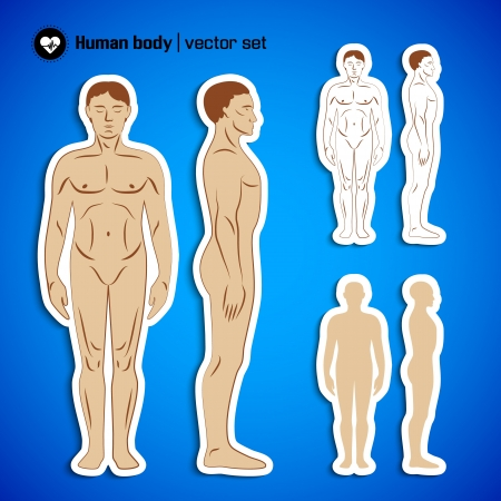 Human  body infographics  Vector Illustration, eps10, contains transparencies  Vector
