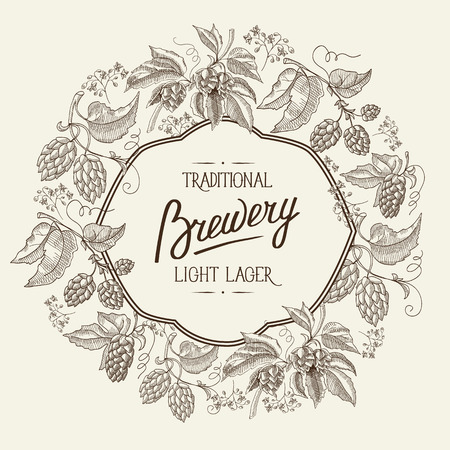 humulus lupulus: Traditional brewery alcohol. the Light lager beer. Hand drawing background. vintage style. Vector Illustration, eps10, contains transparencies.