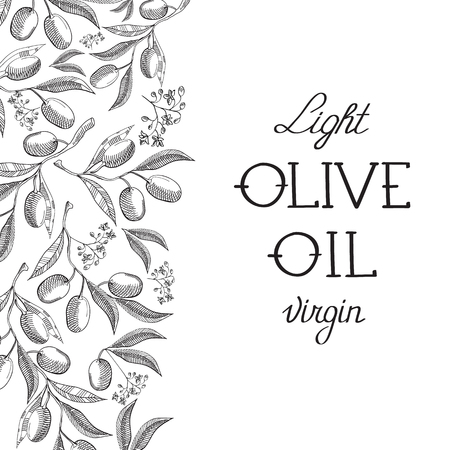 olive green: Olive extra virgin. Hand drawing background. vintage style. Vector Illustration, eps10, contains transparencies. Illustration