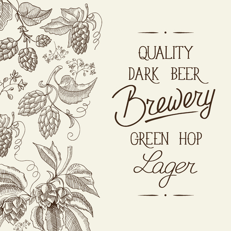 humulus lupulus: Premium quality. Original dark beer. Hand drawing background. vintage style. Vector Illustration, eps10, contains transparencies.