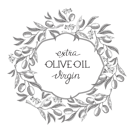 aceite de oliva virgen extra: Extra olive oil virgin. Hand drawing background. vintage style. isolated on the white background. Vector Illustration, eps10, contains transparencies. Vectores