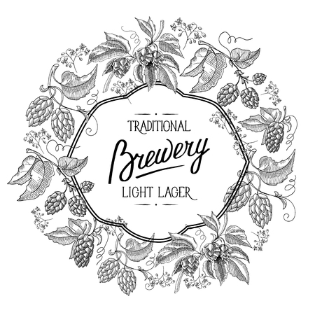 humulus lupulus: Traditional brewery. light lager. Hand drawing background. vintage style. isolated on the white background. Vector Illustration, eps10, contains transparencies.