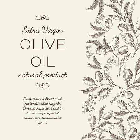 olive green: Olive oil. Hand drawing background . vintage style. Vector Illustration, eps10, contains transparencies.