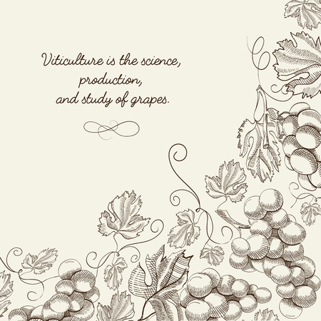 wine grapes: Twigs grapes background. Sketch. Hand drawing. Design concept. Vector Illustration, eps10, contains transparencies.